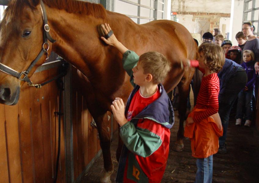 Pferd1 in Projekttag: Auf dem Fohlenhof